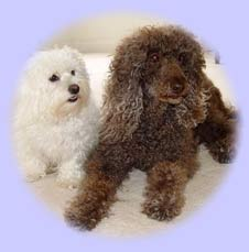 Two of Michelle Jackson's dogs